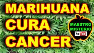Marihuana CURA Cancer -  Sera verdad?