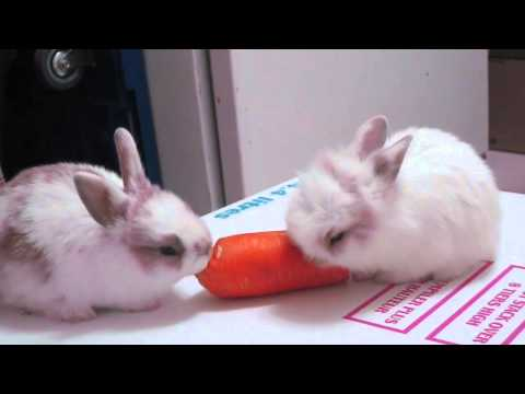 Baby Bunnies Eating A Carrot