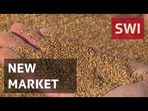 Swiss farmers are experimenting with quinoa