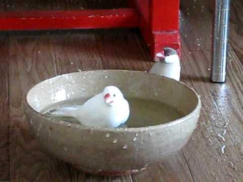 女風呂を覗き見
