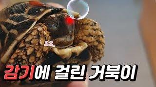 허걱 감기로 콧물 방울이 나오는 거북이 기운을 회복시키…