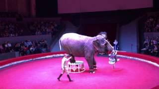 Новосибирский цирк, шоу слонов.