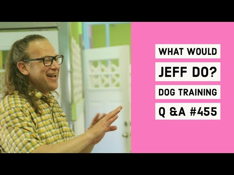 Stop dog barking | Dog stops on walks | What Would Jeff Do? Dog Training Q & A #455