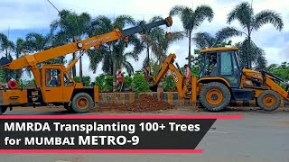 MMRDA Transplanting hundreds of Trees for Mumbai Metro-9 at Bhayandar || MetroRail Blog