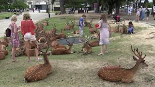 奈良公園 Nara Park in Japan thumbnail