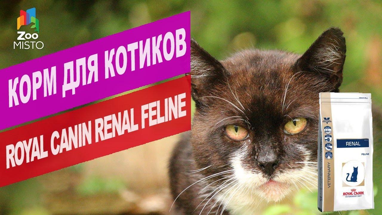 Корм для котиков Royal Canin Renal Feline | Обзор корма для котиков Royal Canin Renal Feline
