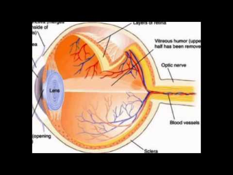 Physics of the eye youtube physics of the eye ccuart Image collections