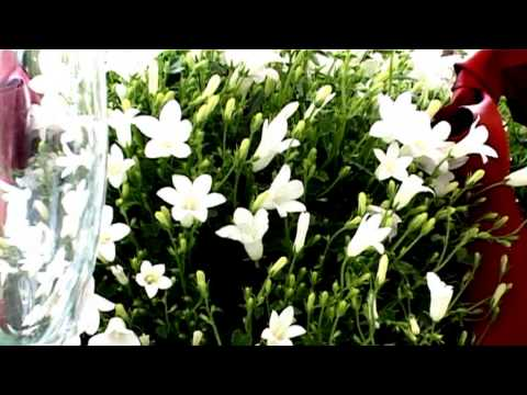 Yoghurt Rooms Promotional Video 2013
