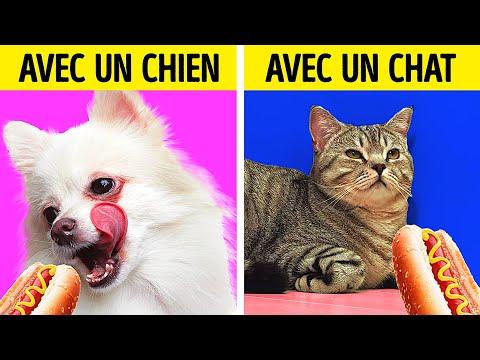 LA VIE AVEC UN CHIEN VS LA VIE AVEC UN CHAT || 27 ASTUCES INCROYABLES POUR LES ANIMAUX
