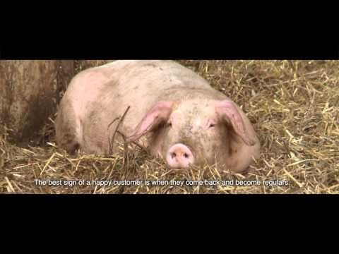 Organic Food from Finland - Organic Pork