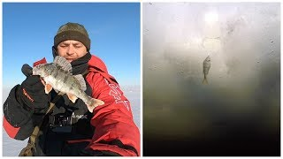 Зимняя ловля Окуня на Чудском озере. Подлёдное видео рыбы. Искусственный мотыль и опарыш.