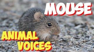 Звуки природы слушать онлайн мышь