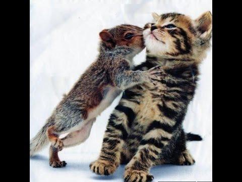 смотреть бесплатно приколы про животных