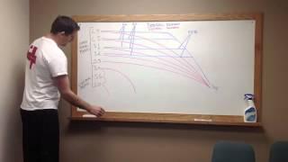 How to draw the Lumbosacral Plexus