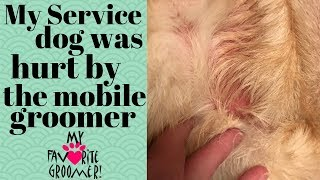 What happened to my service dog with the mobile groomer