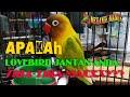 Lovebird Jantan Anda Dah Gacor Dipasangi Macet  Mp3 - Mp4 Download