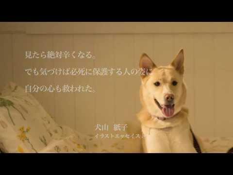 画像: 映画『犬に名前をつける日』予告編(ドラマ版) youtu.be