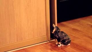 Котята породы Уральский рекс Cookie & Cake Découte