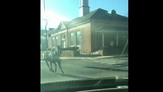 Zebras captured after breaking loose in Philly