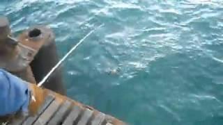 Смотреть приколы про рыбалку бесплатно Смотреть видео приколы про ловлю леща с берега на поплавок(Смотреть приколы про рыбалку бесплатно Смотреть видео приколы про ловлю леща с берега на поплавок бесплатн..., 2014-08-15T23:04:46.000Z)