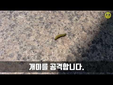 [자연 다큐] 애벌레의 힘든 하루 (1080 60fps)