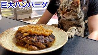 手作り巨大ハンバーグの香りに我慢できず邪魔しに来てしまった猫w