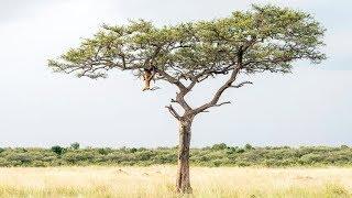 हिरण के अलावा इस photo में छुपा है खतरनाक जानवर, क्या दिखा आपको?