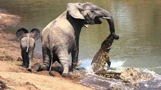 Дикие животные. Мир африки. Крокодилы и дикие животные. Охота. Подборка видео про животных.