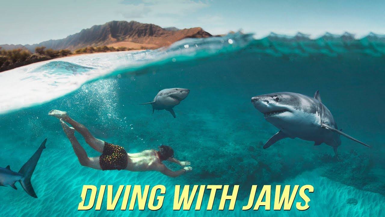 Diving With Sharks NO Cage!?