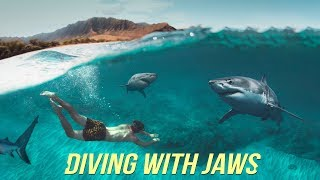 Diving with Sharks NO Cage!? - Oahu Hawaii