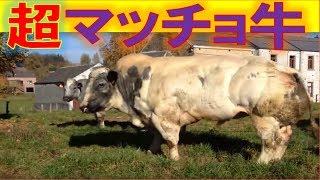 【衝撃】超マッチョな動物特集!犬のマッチョは圧巻…どうすればこうなる...
