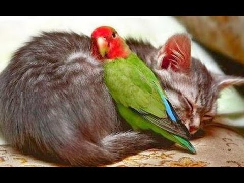 Thumbnail: Birds Playing With Cats Compilation 2014 [NEW]