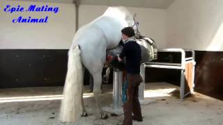 Animal mating Funny Animals Compilation Animal Videos   Horse mating with fake hores | funny horse