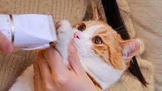 【花花与三猫】猫咪被剃脚毛,爪子奇痒暴跳如雷,直接撕烂了猫包!
