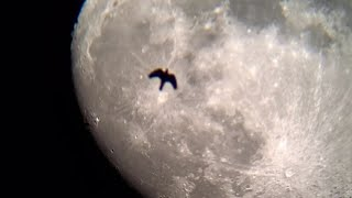 달 관측 영상