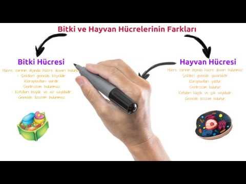 7. Sınıf Fen Bilimleri Bitki Hücresi Model Yapımı SİHİRLİ TV RFY
