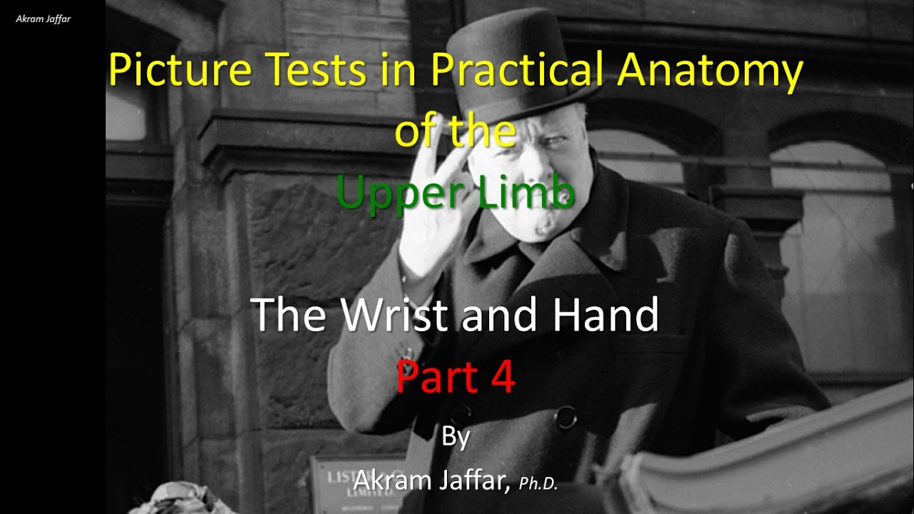 Picture Test in Anatomy Wrist and Hand 4 - YouTube