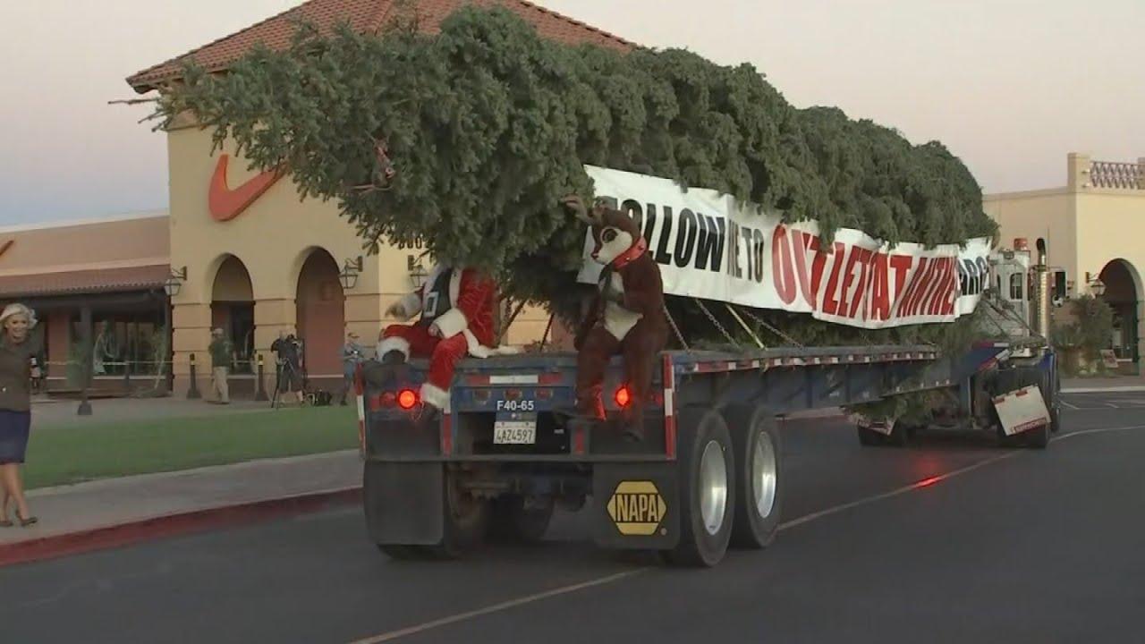 Arizona's tallest fresh-cut Christmas tree arrives at the ...