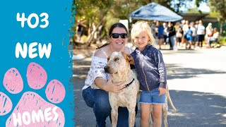 Record breaking level of adoptions at 2020 Clear the Shelter RSPCA South Australia.