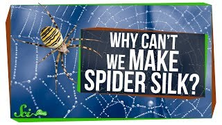 why-can-t-we-make-spider-silk