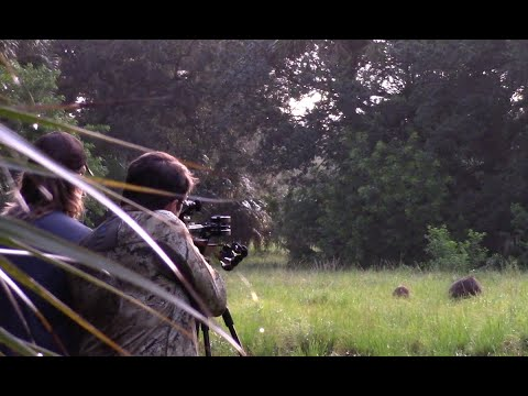 Closeup Crossbow Hog Hunting – Two Kills