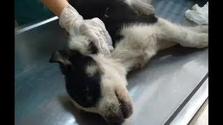 Щенка, кошку и Фунтика отвезла к врачу  Щенка и кошу забрала домой, а Фунтик остался в Идее