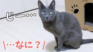 ツンデレ猫の行動が謎すぎる…