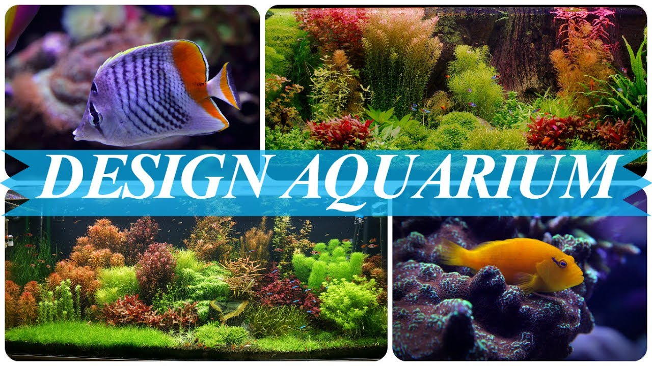 ideen f r aquarium gestaltung youtube. Black Bedroom Furniture Sets. Home Design Ideas