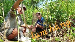 Thăm bẫy rắn mùa khô. Cầm rắn trên tay mà nó sướng | Săn bắt SÓC TRĂNG |