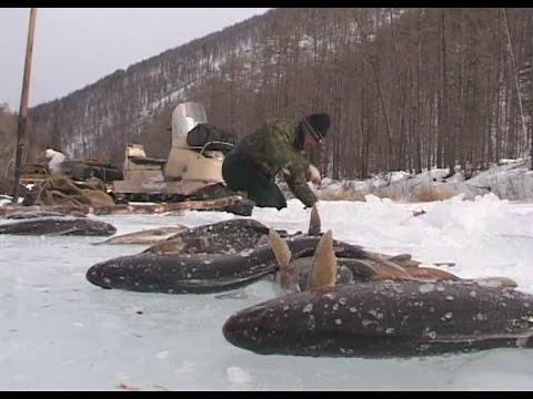 Будет рыба, Михалыч!!! Зимняя рыбалка в Прибайкалье.