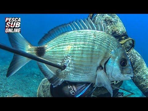 Pescasub un ora di pesca pagata d'oro - Pesca subacquea catena d'oro 1.200€, gold chains underwater from YouTube · Duration:  6 minutes 26 seconds
