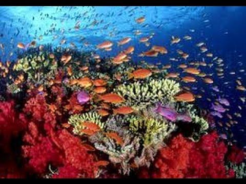 Los Corales en el Mar Caribe, Guarderías del mar - TvAgro por Juan Gonzalo Angel