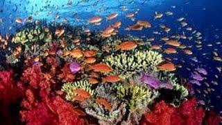 Como Cultivar Corales Para Salvar Los Arrecifes En El Mar Caribe Tvagro Por Juan Gonzalo Angel Youtube