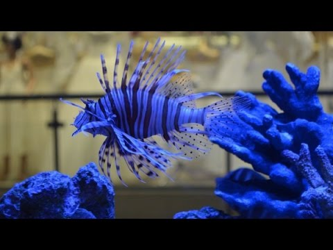 The 15 Most Beautiful Fishes In The World Youtube